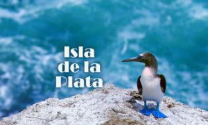 Isla de la Plata czyli Galapagos dla ubogich?