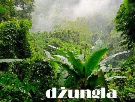 Dżungla nie taka straszna jak o niej mówią